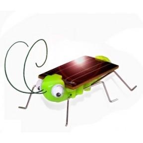 Grilo Solar Grilouco
